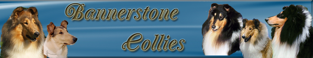 Bannerstone Collies